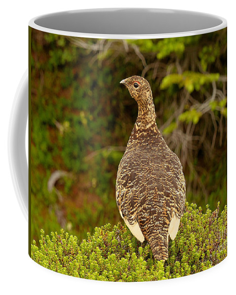 Willow Ptarmigan Coffee Mug featuring the photograph Arctic Willow Ptarmigan by Teresa A and Preston S Cole Photography