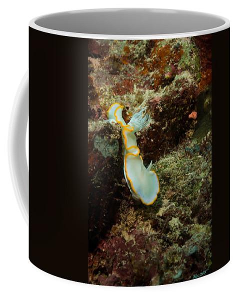 Diving Coffee Mug featuring the photograph Ardreadoris Egretta by Mumbles and Grumbles