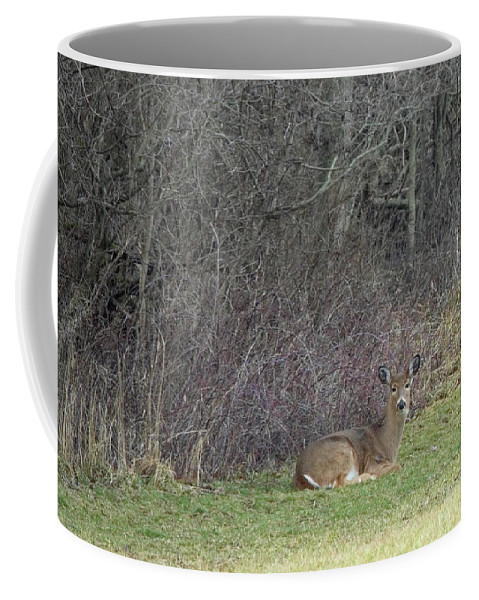 Wildlife Coffee Mug featuring the photograph Are You Friend Or Foe by Larry Heins
