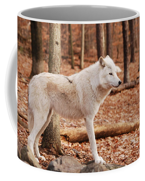 Wolf Coffee Mug featuring the photograph Are You Talking To Me by Lori Tambakis