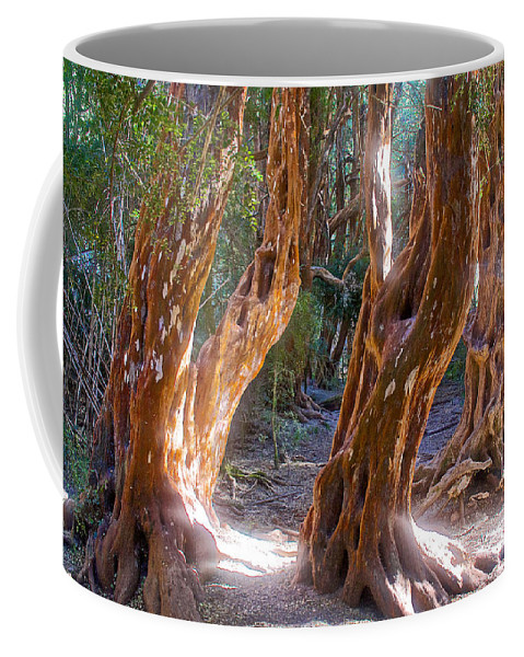 Arrayanes Grove On Trail In Arrayanes National Park Near Bariloche Coffee Mug featuring the photograph Arrayanes Grove On Trail In Arrayanes National Park Near Bariloche-argentina by Ruth Hager