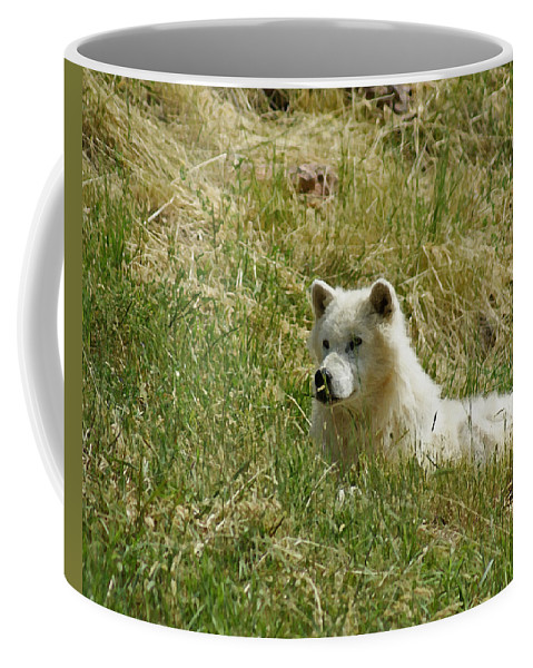 Animals Coffee Mug featuring the mixed media Artic Wolf 2 Dry Brushed by Ernie Echols
