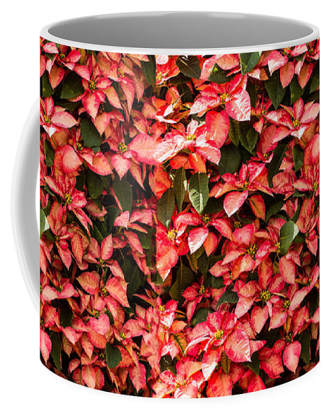 Poinsettia Coffee Mug featuring the photograph Christmas Flower by Zina Stromberg