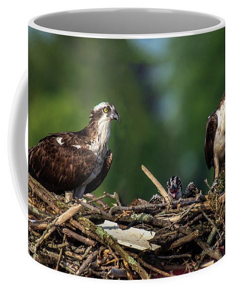 Osprey Coffee Mug featuring the photograph Osprey Family Night by Gary E Snyder