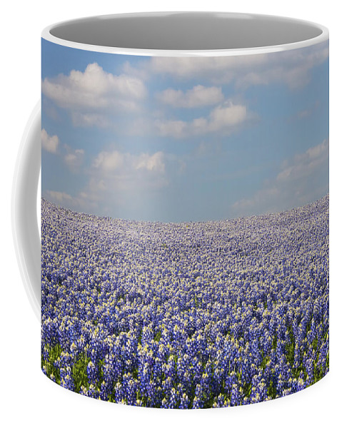 Muleshoe Bend Recreation Area Texas Bluebonnet Bluebonnets Flower Flowers Bloom Blooms Landscape Landscapes Spring Coffee Mug featuring the photograph As Far As The Eye Can See by Bob Phillips