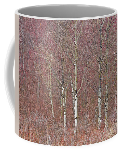 Aspen Coffee Mug featuring the photograph Aspen And Buckbrush by Darrel Giesbrecht