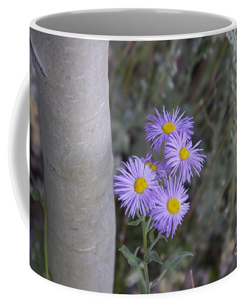 Coffee Mug featuring the photograph Aspen Asters by Michael Shaft