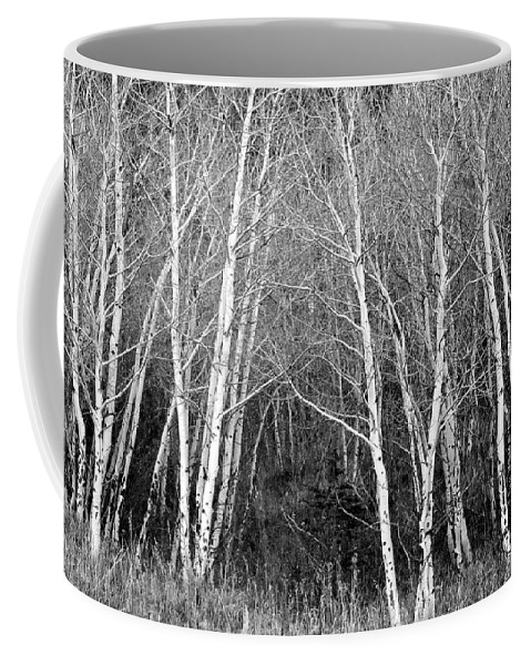 Aspen Coffee Mug featuring the photograph Aspen Forest Black And White Print by James BO Insogna