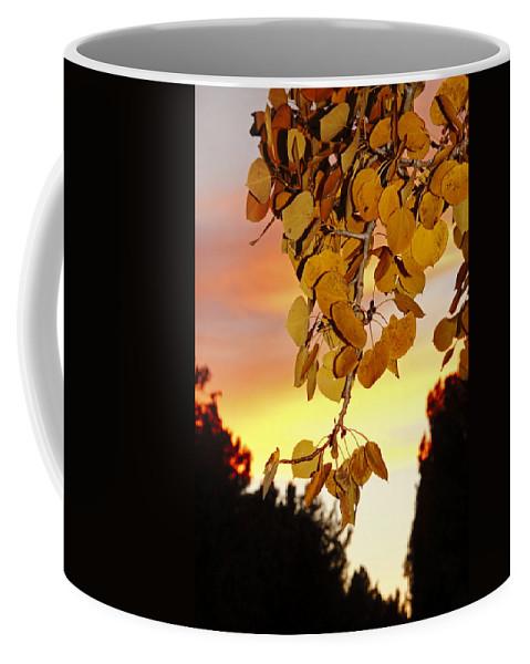 Aspens Coffee Mug featuring the photograph Aspens At Sunset by Diane Zucker