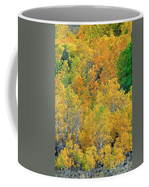 North America Coffee Mug featuring the photograph Aspens In Fall Eastern Sierras California by Dave Welling