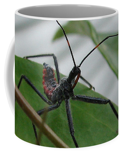 Insect Red Black Green Leaf Coffee Mug featuring the photograph Assassin Bug by Luciana Seymour
