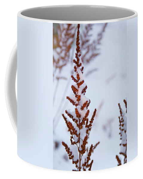 Astilbe Coffee Mug featuring the photograph Astilbe Aglow In The Snow by Douglas Barnett
