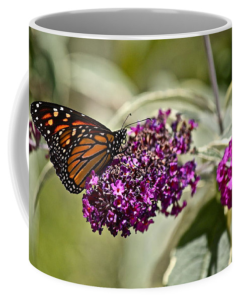Butterfly Coffee Mug featuring the photograph Attraction by Diana Hatcher