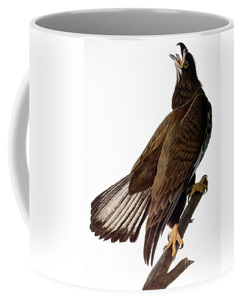1838 Coffee Mug featuring the photograph Audubon: Bald Eagle by Granger