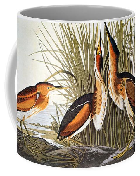 1838 Coffee Mug featuring the photograph Audubon: Bittern by Granger
