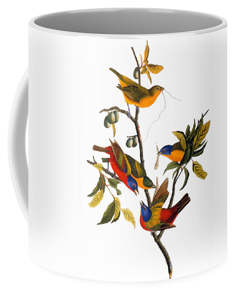 1827 Coffee Mug featuring the photograph Bunting, 1827 by John James Audubon