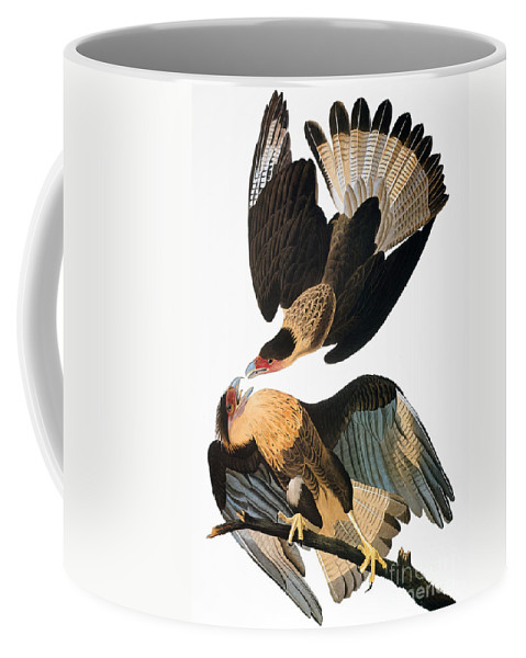1827 Coffee Mug featuring the photograph Audubon: Caracara, 1827-38 by Granger