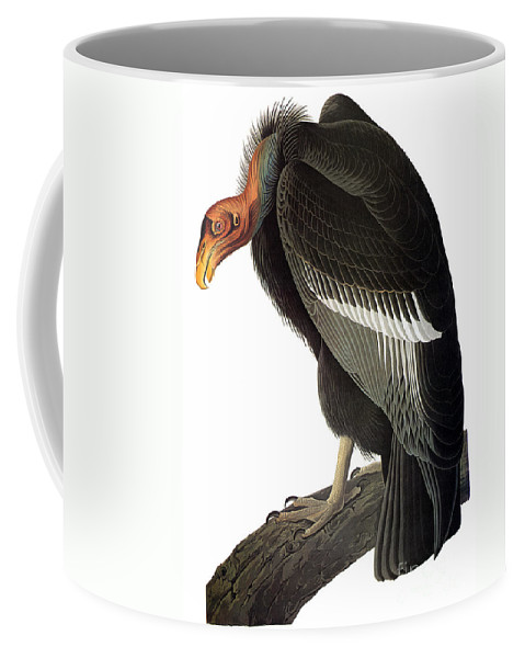 1827 Coffee Mug featuring the photograph Audubon: Condor by Granger