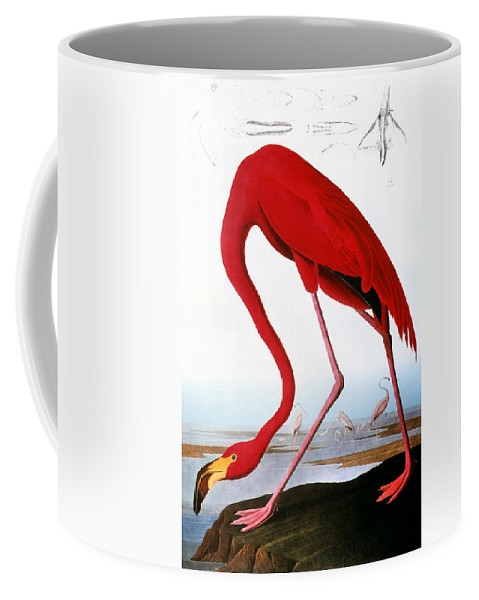 1827 Coffee Mug featuring the photograph Audubon: Flamingo, 1827 by Granger