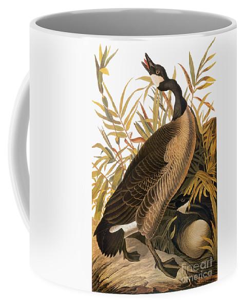 1838 Coffee Mug featuring the photograph Audubon: Goose by Granger