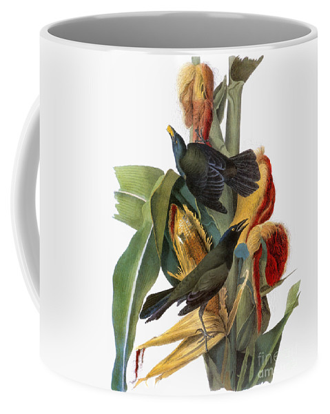 1838 Coffee Mug featuring the photograph Audubon: Grackle by Granger