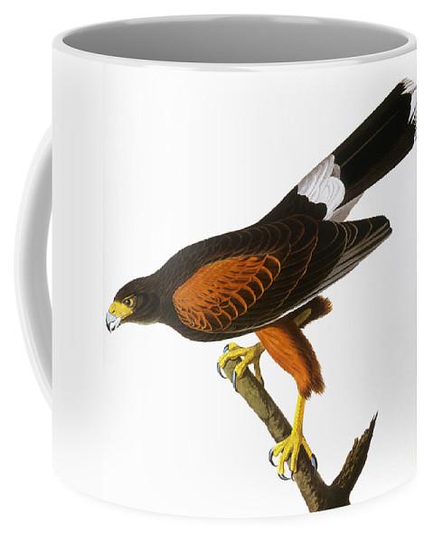 1827 Coffee Mug featuring the photograph Audubon: Hawk, 1827 by Granger