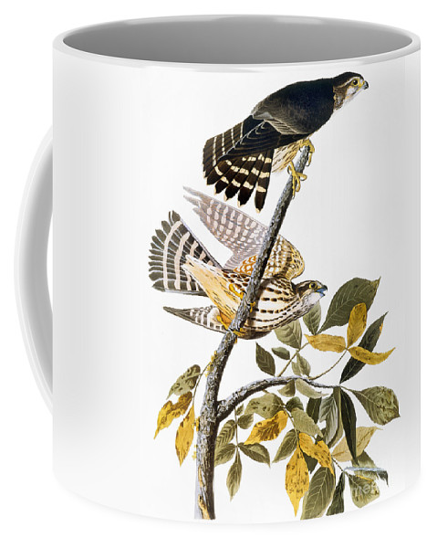 1838 Coffee Mug featuring the photograph Audubon: Hawk by Granger