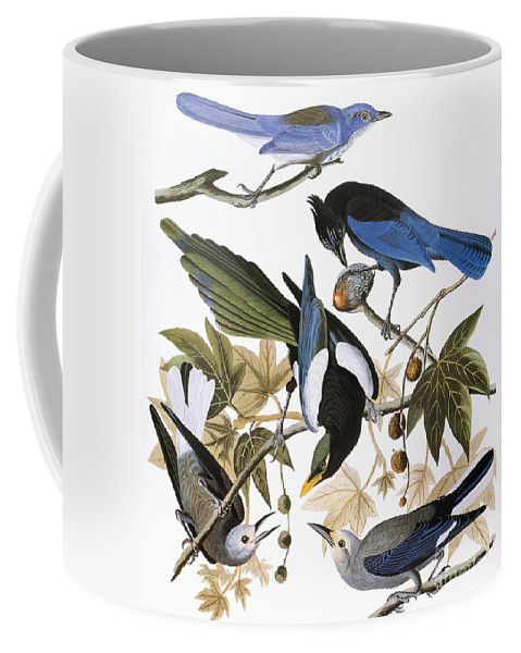 1838 Coffee Mug featuring the photograph Audubon: Jay And Magpie by Granger