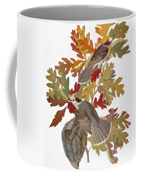1838 Coffee Mug featuring the photograph Audubon: Jay by Granger