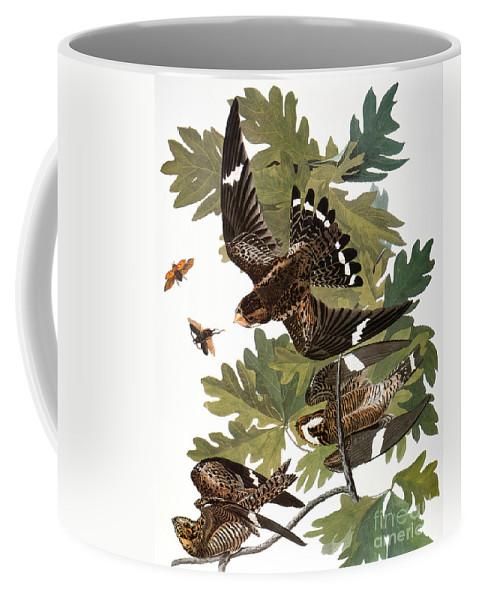 1838 Coffee Mug featuring the photograph Audubon: Nighthawk by Granger