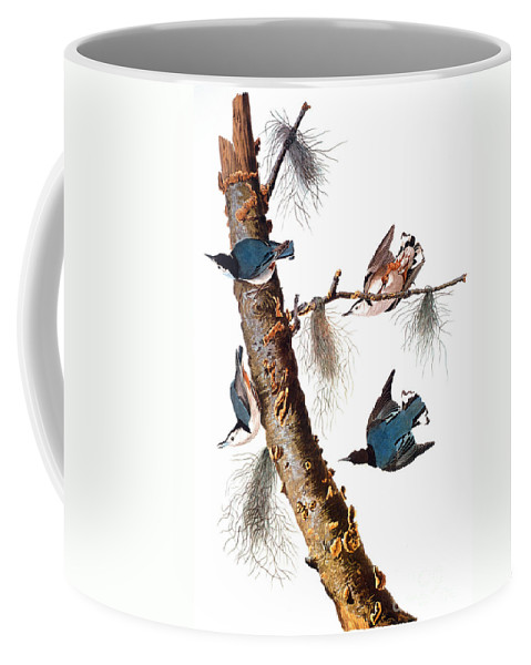 1838 Coffee Mug featuring the photograph Audubon: Nuthatch by Granger