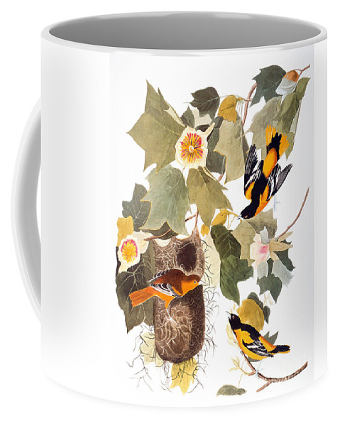 1838 Coffee Mug featuring the photograph Audubon: Oriole by Granger