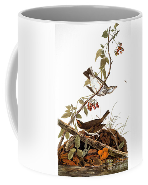 1838 Coffee Mug featuring the photograph Audubon: Ovenbird by Granger