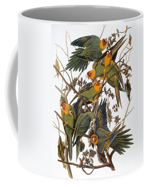 American Coffee Mug featuring the photograph Audubon: Parakeet by Granger
