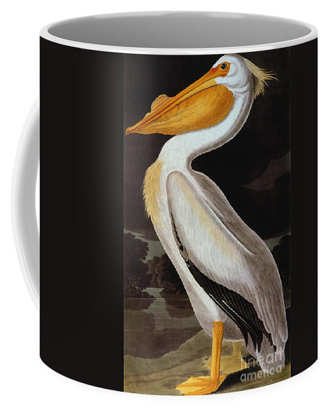 19th Century Coffee Mug featuring the photograph Audubon: Pelican by Granger