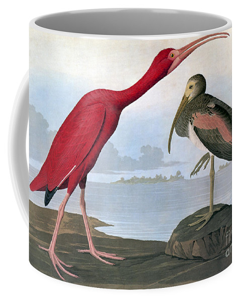 1820s Coffee Mug featuring the photograph Audubon: Scarlet Ibis by Granger