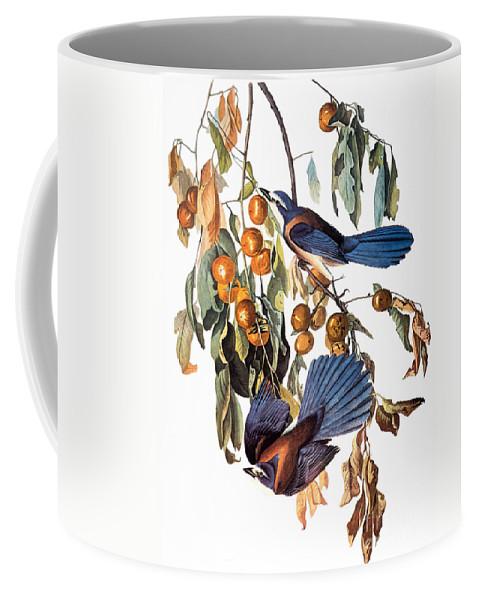 1827 Coffee Mug featuring the photograph Audubon: Scrub Jay, 1827-38 by Granger