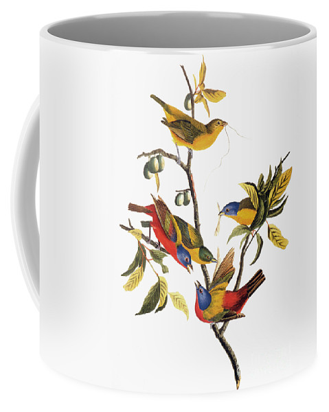 1838 Coffee Mug featuring the photograph Audubon: Sparrows by Granger