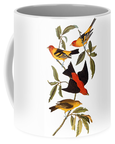 1827 Coffee Mug featuring the photograph Audubon: Tanager, 1827 by Granger