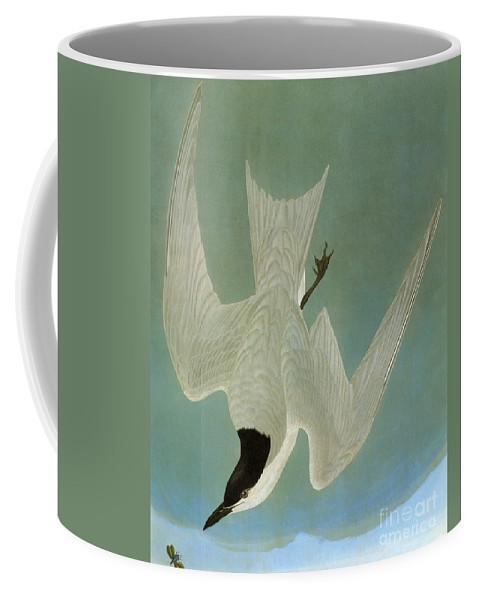 1827 Coffee Mug featuring the photograph Audubon: Tern by Granger