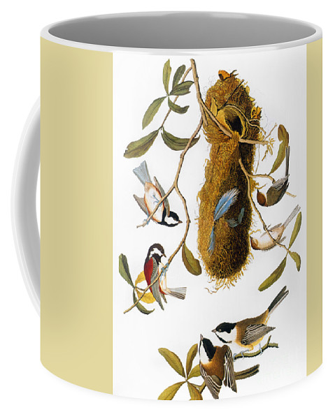 1838 Coffee Mug featuring the photograph Audubon: Titmouse by Granger