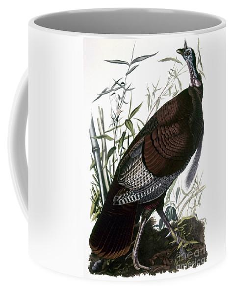 1838 Coffee Mug featuring the photograph Audubon: Turkey by Granger