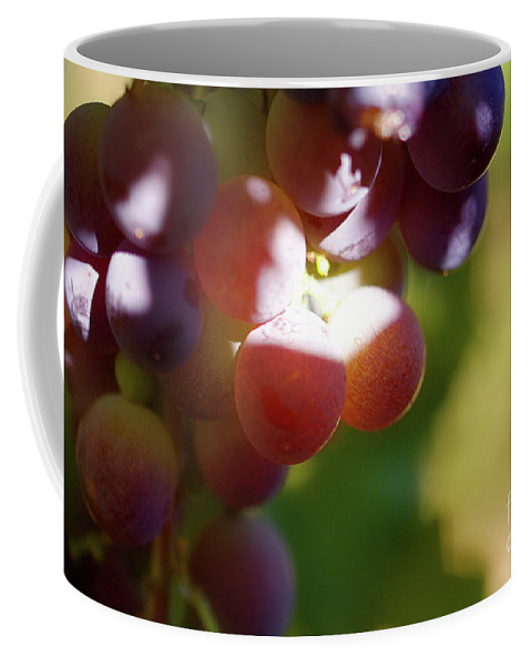 Grapes Coffee Mug featuring the photograph Auntie Thelma's Grapes - Ripening by Carolyn Parker