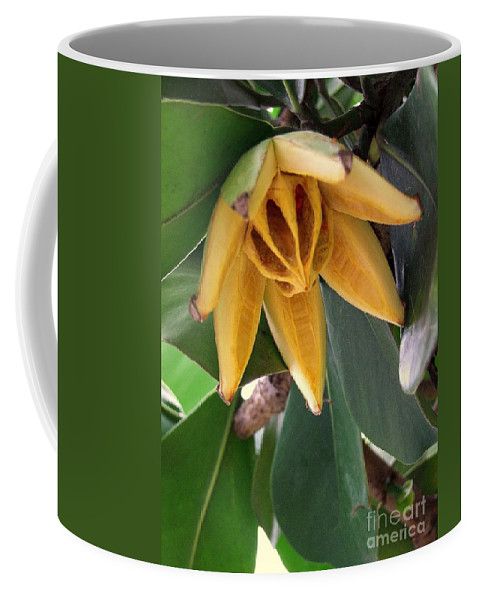 Autograph Tree Coffee Mug featuring the photograph Autograph Tree Seed Pod by Mary Deal