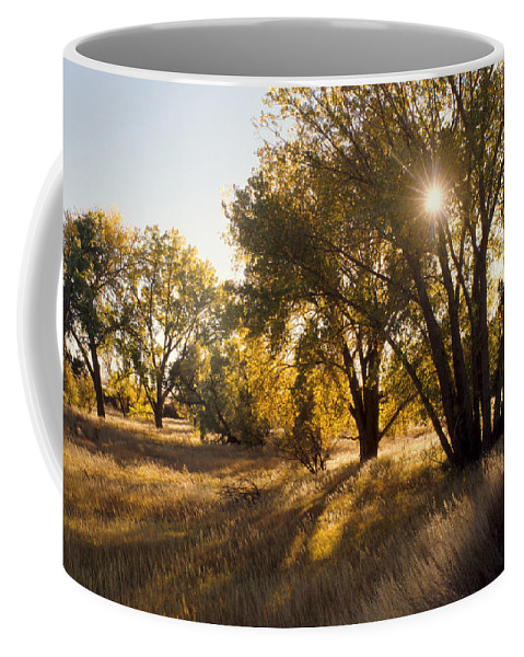 Fall Coffee Mug featuring the photograph Autum Sunburst by Jerry McElroy
