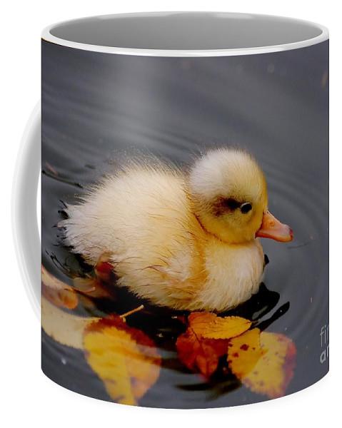 Bird Coffee Mug featuring the photograph Autumn Baby by Jacky Gerritsen