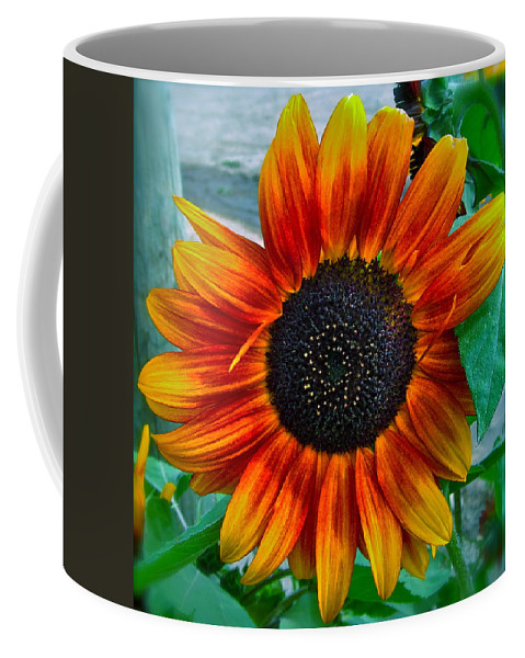 Sunflower Coffee Mug featuring the photograph Autumn Blessing by Gwyn Newcombe