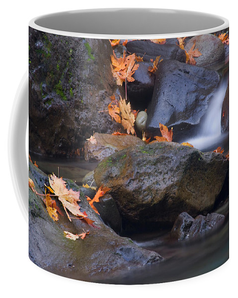 Fall Coffee Mug featuring the photograph Autumn Cascades by Mike Dawson