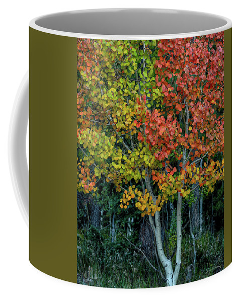 Color Coffee Mug featuring the photograph Autumn Colors by Joy Watson