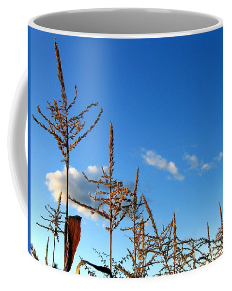 Autumn Coffee Mug featuring the photograph Autumn Corn by Will Borden